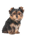 Funny puppy sits on white background