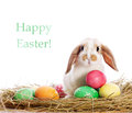 Funny rabbit and easter eggs Stock Photos