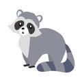 Funny Raccoon Sitting