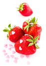 Funny ripe strawberry on white background decorated with sweet hearts closeup Stock Photos