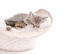 Funny sleeping kittens in basket Royalty Free Stock Photo