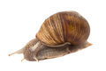 Funny snail isolated on white background Stock Photo