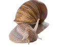 Funny snail isolated on white background Stock Image