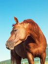 Funny sorrel horse outdoor sunny day Royalty Free Stock Images