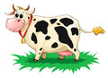 Funny spotted cow Stock Photo
