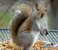Funny Squirrel Stock Image