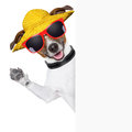 Funny summer dog behind blank banner Stock Photography