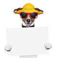 Funny summer dog holding blank banner Stock Photo