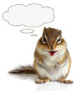 Funny talking animal chipmunk on white Royalty Free Stock Photos