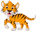 Funny tiger cartoon walking illustration of Royalty Free Stock Photo
