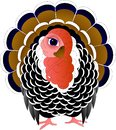 Funny turkey with a brown tail