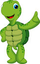 Funny turtle cartoon cute raised his thumb Stock Photos