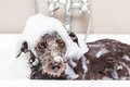 Funny Unhappy Wet Terrier Dog in Bathtub Royalty Free Stock Photo