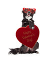 Funny Valentine Dog Holding Heart Candy Box Royalty Free Stock Photo