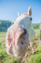 Funny white horse portrait up close Stock Photos