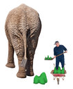 Funny worker in dead end job shovel elephant poop a is stuck a shoveling isolated on white Royalty Free Stock Photo
