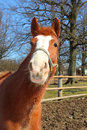 Funny young horse portrait of in sunny day Royalty Free Stock Images