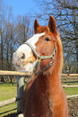 Funny young horse portrait of in sunny day Stock Photography