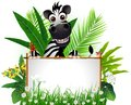 Funny zebra with blank sign Royalty Free Stock Photo