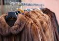 Fur coat very sofly in vintage style luxury Stock Photos