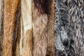 Fur coats close up of an animal colored texture arranged in Stock Photos