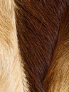 Fur textures Stock Photos