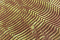 Furrows and ripples on wet sand texture Royalty Free Stock Photo