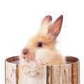 Furry bunny in a box   Stock Images