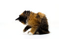 Furry kitten on white background isolated Royalty Free Stock Photo