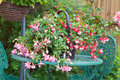 Fuchsia container plant on garden table Royalty Free Stock Photo
