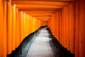 Fushimi inari taisha is the head shrine of located in ku kyoto japan the temple is famouse in japan Stock Photography