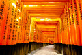 Fushimi inari taisha shrine kyoto japan for adv or others purpose use Royalty Free Stock Photo