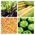 Future harvest Royalty Free Stock Photography