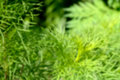 Fuzziness background in the nature Stock Photography