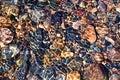 Fuzzy texture sea stones glare Royalty Free Stock Images
