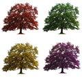 Fyra isolerade oaktrees Royaltyfri Bild