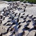 Głaz wyspy pingwiny Zdjęcie Royalty Free