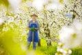 Gärtner spaten kischblüte löwenzahn gardener to spavins cherry flower dandelion Royalty Free Stock Images