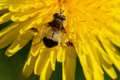 Gadfly on the flower. Royalty Free Stock Photo