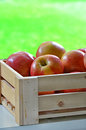 Gala apples delicious in wooden crate on windowsill with vibrant green background Royalty Free Stock Images