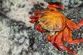 Galapagos Crab, Galapagos Isla...