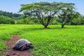 Galapagos giant tortoise on Santa Cruz Island in Galapagos Natio Royalty Free Stock Photo