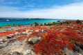 Galapagos island landscape beautiful of south plaza Royalty Free Stock Photo