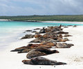 Galapagos sea lions sleeping on the beach in espanola island in the Stock Photography