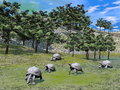 Galapagos tortoises in nature d render several walking on the grass green by daylight Royalty Free Stock Photography