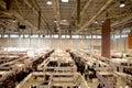 Galerías de arte de hall shopping en proyector Imagen de archivo libre de regalías