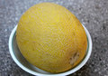 Galia melon sarda in india and persia cucumis melo var reticulatus a up to kg in size with light yellow to dark yellow Royalty Free Stock Images