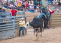 Gallup indian rodeo new mexico august cowboys participates in a bull riding competition at the nd annual in nm on august Stock Images