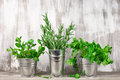 Galvanized bucket with greens Royalty Free Stock Photo
