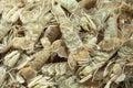 Gambero di Mantis dei crostacei del Mar Mediterraneo Immagini Stock